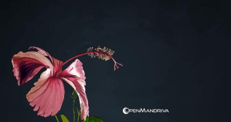 OpenMandriva Wallpaper